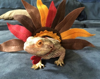 Mexican Fiesta Costume For Bearded Dragons Three Sizes One