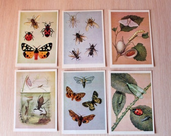 Insects. Set of 31 Vintage Postcards, 1988, postcards with bug, butterfly, fly, dragonfly, ect.