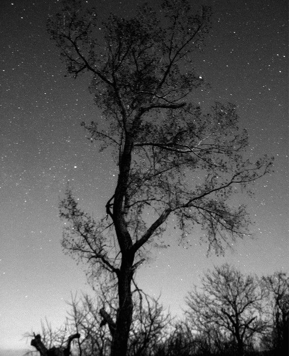Black and white tree on a postcard with starry night