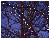 Starry Night, Fairy Lights, Tree Photography, Sparkle Print, Winter, Fairy Lights Photo, Hanging Lights, Midnight Blue, Christmas, Night