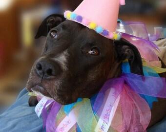 Special Happy Birthday Ribbon Dog Collar