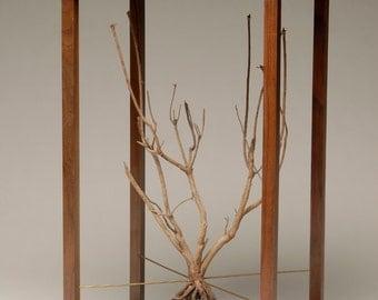 Arbor de Vitae or Tree of Life