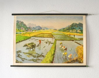 Vintage pull down chart educational chart map India school chart rice plantation farming poster