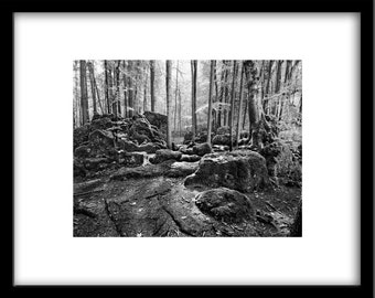 Nature photos, photos of nature, black and white photography, nature photography, black and white landscape photography, black and white art
