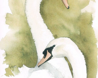 Mute Swans Pair Greeting Card