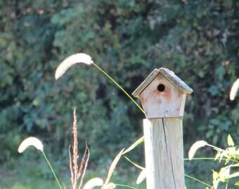Rustic Birdhouse, Country Photo, Birdhouse on a Post, Rural Birdhouse