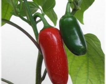 75+ Jalapeno Pepper Seeds- Heirloom