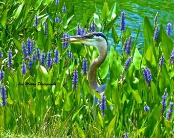 A Talkative Heron in Blooms