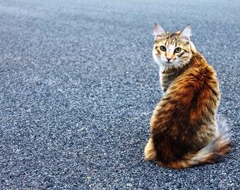 "Cat photo 12""X18"" photograph"