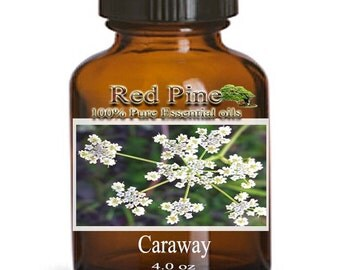 Caraway Essential Oil - Carum carvi - 100% Pure Therapeutic Grade
