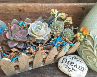 """Shabby Chic Succulent Gift Box. Three 2.5"""" premium succulents in Shabby Chic Fence Box - La Fleur Succulente"""