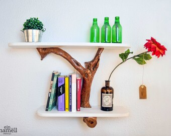 Shelf in olive tree trunk.