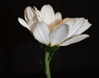 White flower photograph print 8x6