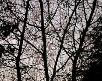 Tree silhouette, branches, brown tint, nature, photographic print