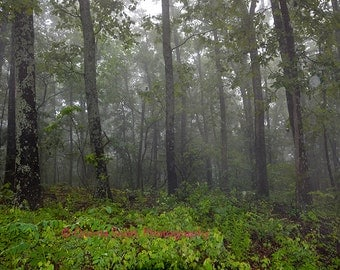 Missouri Ozarks: Glade Top Trail, Forest in Fog, Landscape Photograph by Quinta Scott