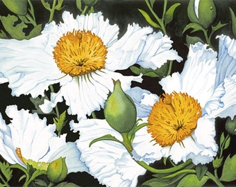 Watercolor painting...GROWING WILD...matilija poppy...giclee