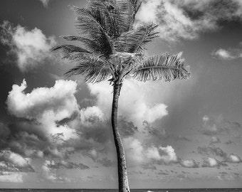 Palm, San Juan, Puerto Rico – Fine Art Photograph, Puerto Rico Photo, Caribbean,Travel Photography, Wall Art, Landscape, Home Decor, Scenic