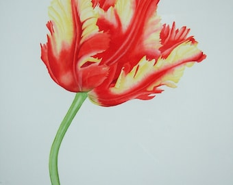 Original watercolour painting of a Parrot Tulip. Unframed without mount.