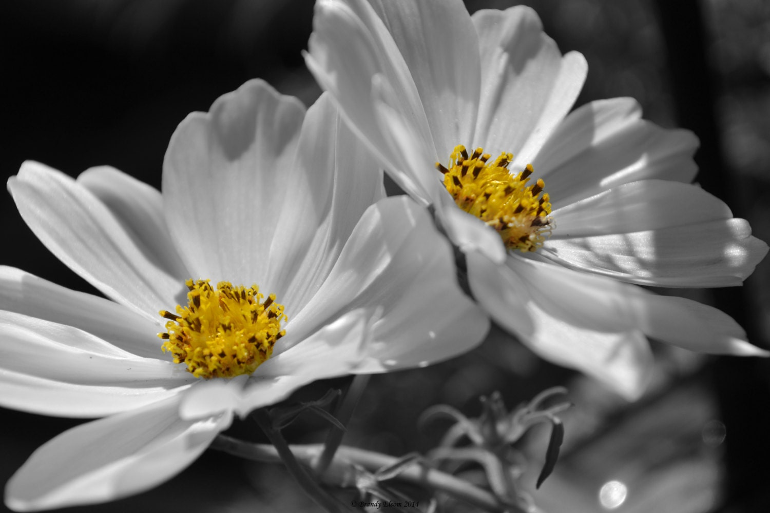 Flower Photography Wall Art Wall Hangings Black And White With - Black and white photography with color accents