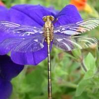 jasminedragonfly