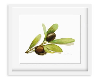 Olives Painting - Watercolor Olives -  8 by 10 print - Watercolor Painting, Archival Print, Minimalist, Home Decor, Garden Art
