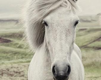 Horse Photograph, white horse photography, portrait, Icelandic horse landscape, dreamy nature