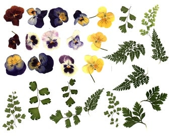 Digital Clipart Transparent png Digital Graphics made from Real Flowers and Ferns Scanned at 300 dpi Instant Download