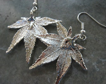 Real Leaf Earrings - Sterling Silver - Japanese Maple