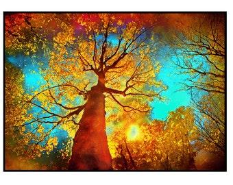 Night sky, 5x7, Autumn trees, nature photography, tree art, landscape, Fall decor, nature decor, tree