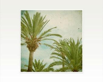 Palm Tree Art, Nature Photography, Retro Wall Art, Tropical - Palm Trees