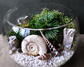 Ammonite Fossil Orb Terrarium - Snail Shell Prehistoric Plants - Jurassic Collectible Fossil Display