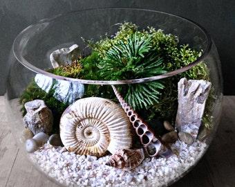 Ammonite Fossil Orb Terrarium - Snail Shell Prehistoric Plants - Jurassic Collectible Fossil Display