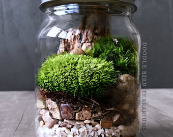 Mason Jar Terrarium: Black Bear, Panda, or Gorilla
