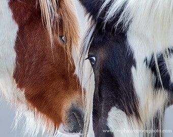 Horse Photography, Horse Detail, Horse Poster, Gypsy Vanner, horse photography, fine art equine photography, Horse Print, Horse Picture