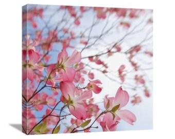 "Pink Dogwood Flower Photo ""Dogwood Stretching"" Spring Flower Nature Photography, Dogwood Photo Dogwood Print Dogwood Art Canvas Gallery Wrap"