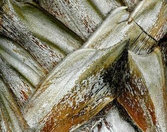 Tree Bark Nature Photography, Neutral Abstract Art,Palm Tree Fine Art Print,Olive Green Modern Art,Abstract Print Tropical Decor,Coastal Art
