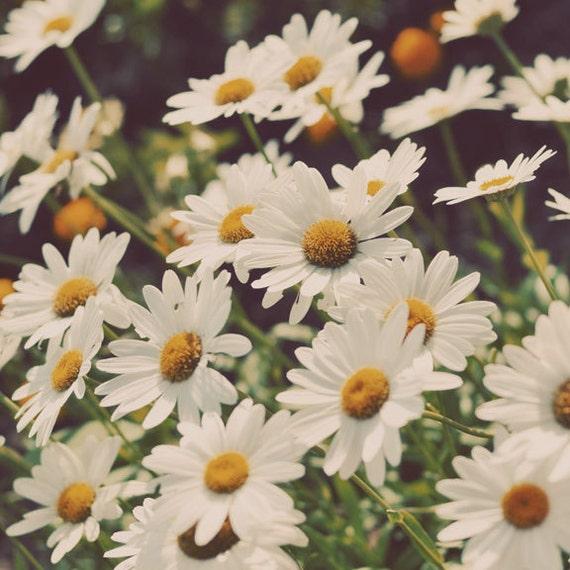 Daisy Photograph, Flower Photography, Kitchen Decor, Vintage Tones, Yellow, Nature Photography, Retro Wall Art