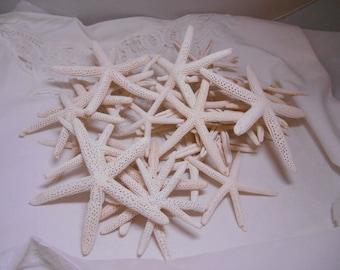 Irregular White Starfish Sea Stars - 34 Pencil starfish  - Fingerling Starfish - 3 to 4 inch