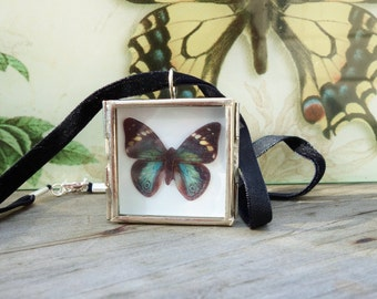Turquoise Emperor butterfly necklace - Silver shadowbox pendant - Miniature Butterfly Collection Display Case - black and teal