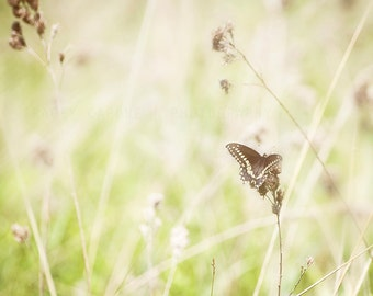 Butterfly Photograph, Spring Wall Art Prints, Nature Photography - nursery art, girls room decor, sage green, off white, gray, meadow print