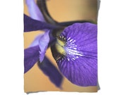 Fleece Blanket -  Purple Iris Flower Foral - Decorative Nature Fleece Blanket - Baby Blanket - Medium Large Blanket