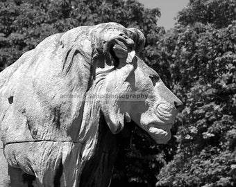 Paris lion black and white photograph