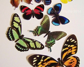 Realistic Paper Butterflies, Ready to use cut outs - Set of eight