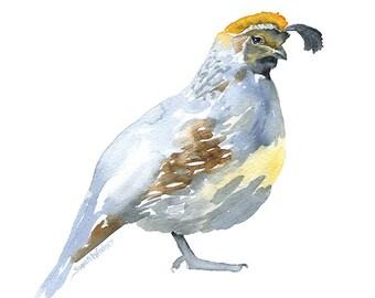 Quail Watercolor Painting - 8 x 10 - Giclee Print - 8.5 x 11 - Bird Painting