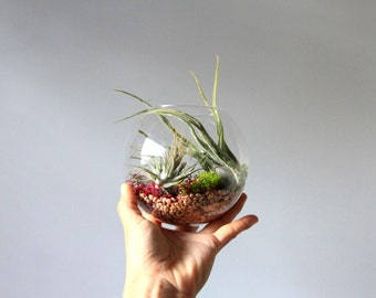 Glass Wall Pocket Aerium // Floating Wall Planter // Modern Living Decor, green home, gift, aerium, terrarium, airplants, tillandsia, eco