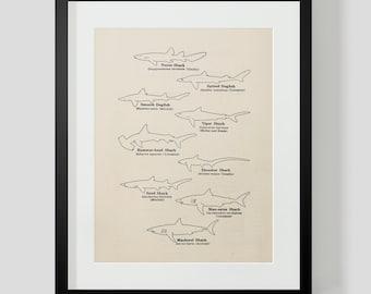 Vintage Sharks Outline