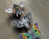Insect  Zentangle Decal Set - Waterproof Stickers
