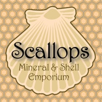 scallopsmineralshell