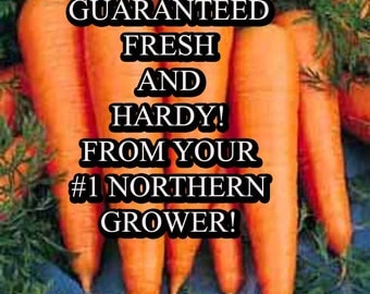 Carrot St. Valery Seed Organic Heirloom Vegetable Seed-Non-GMO Seed