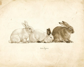 Vintage Rabbits on French Ephemera Print 8x10 P114